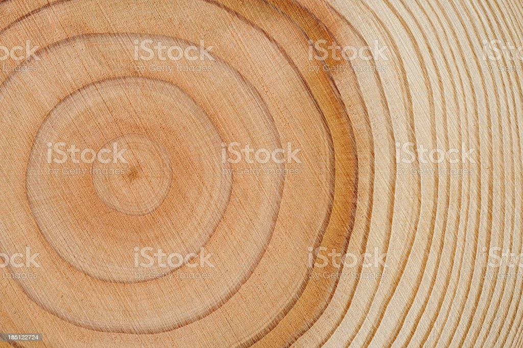 Tree rings texture background stock photo