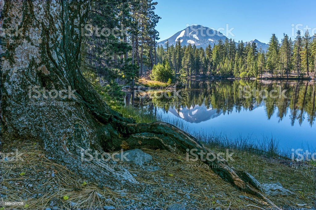 Tree Root along Reflection Lake and Lassen Peak stock photo