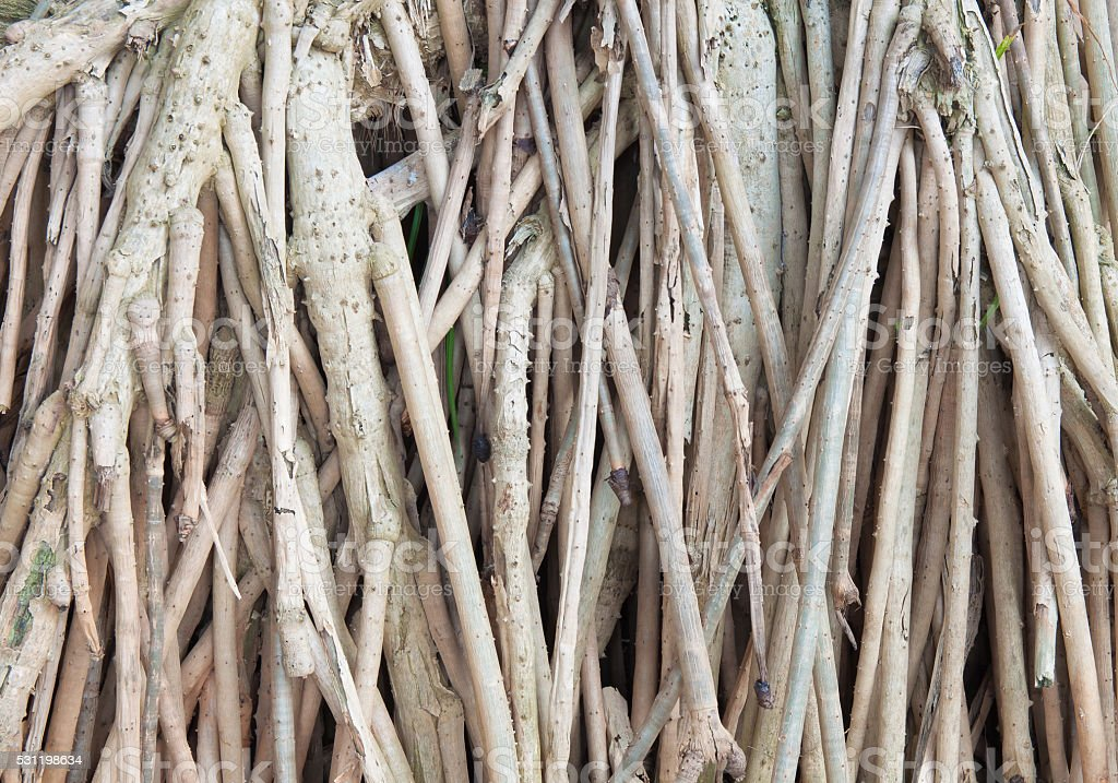 Tree root background royalty-free stock photo