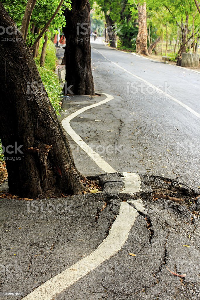 Tree root under Pavement. royalty-free stock photo