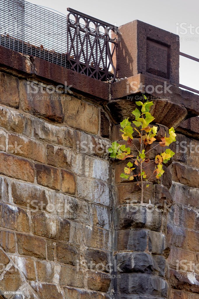 Tree rooted on side of viaduct stock photo