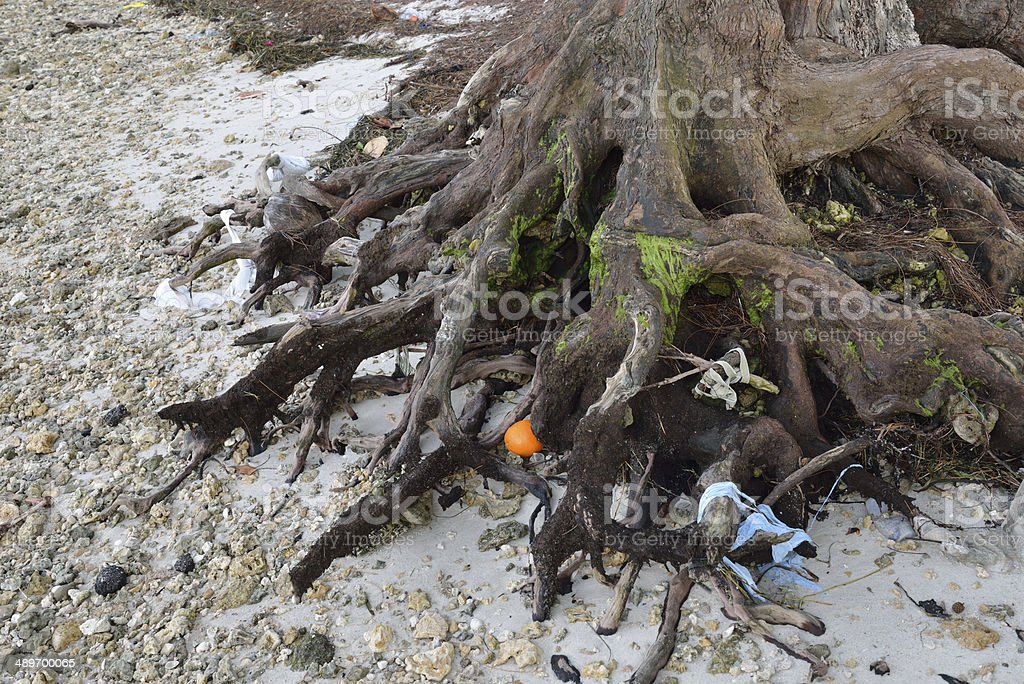 Tree Roots and Trash stock photo