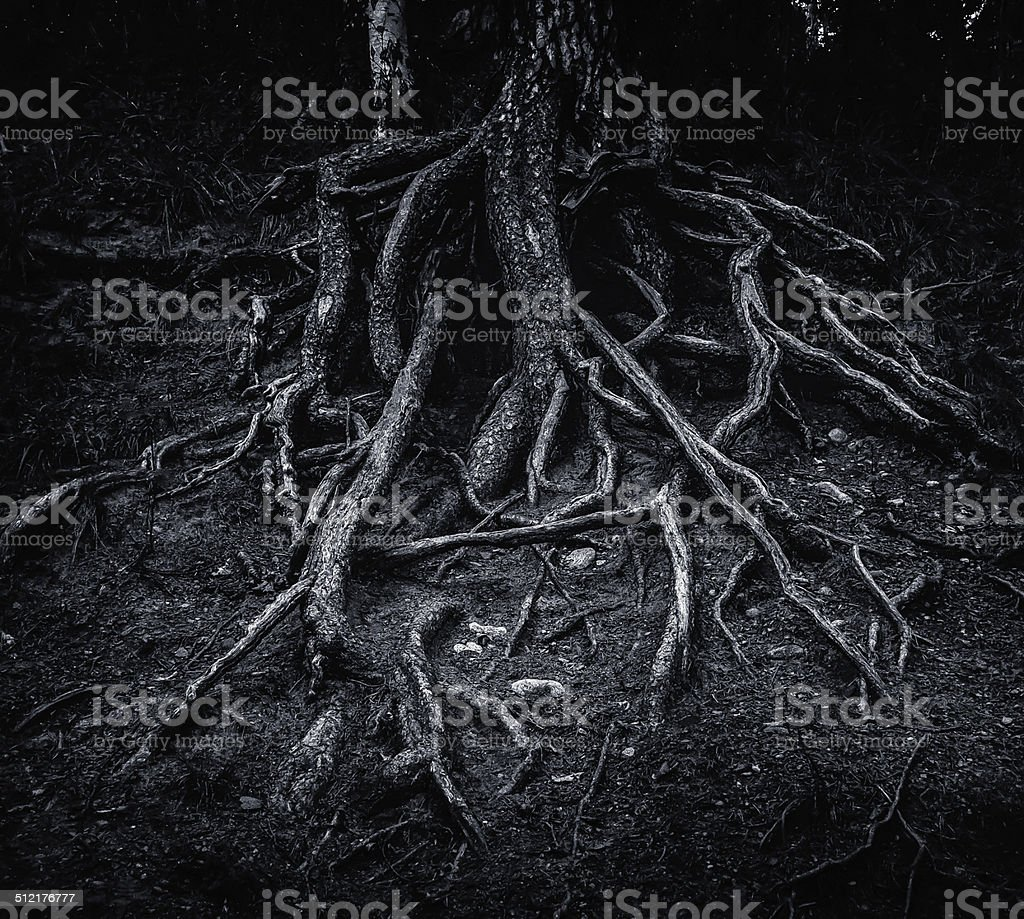 Tree Root's Growing royalty-free stock photo
