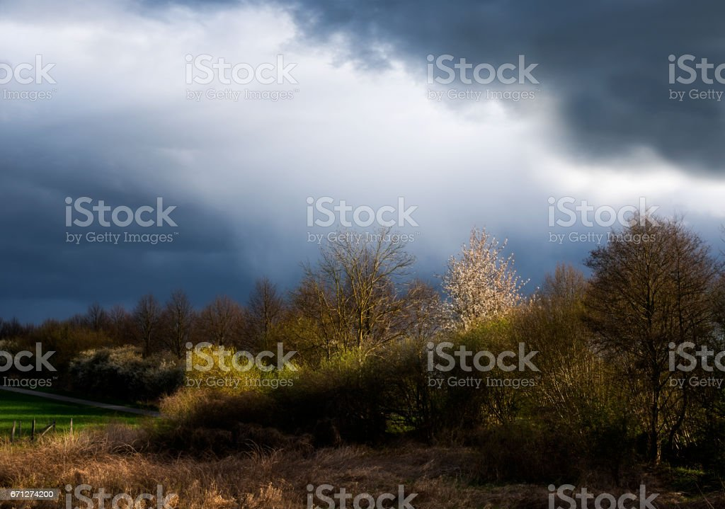 tree row and clouds illuminated by side light are forming two diagonals, rural landscape with atmosphere, copy space stock photo