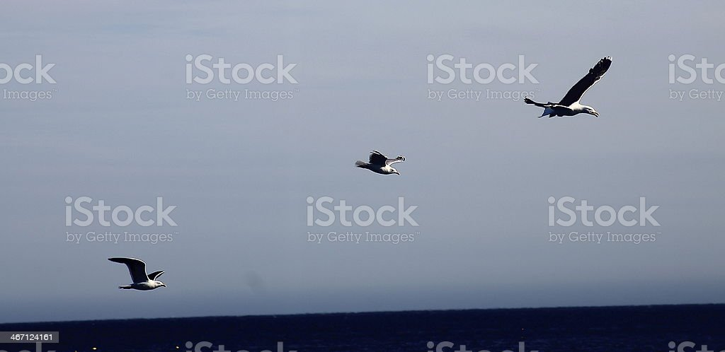 tree seagulls in the sky royalty-free stock photo