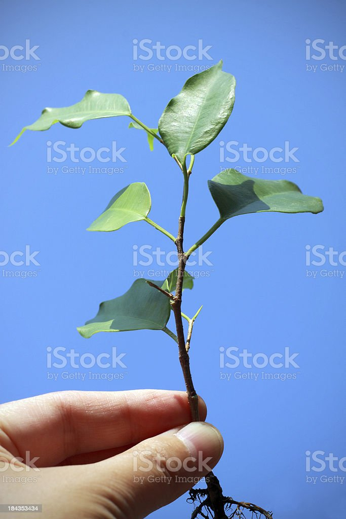 Tree Seedling stock photo