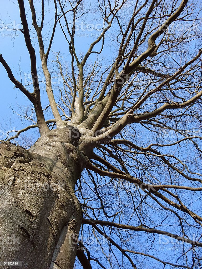 tree seen from below royalty-free stock photo
