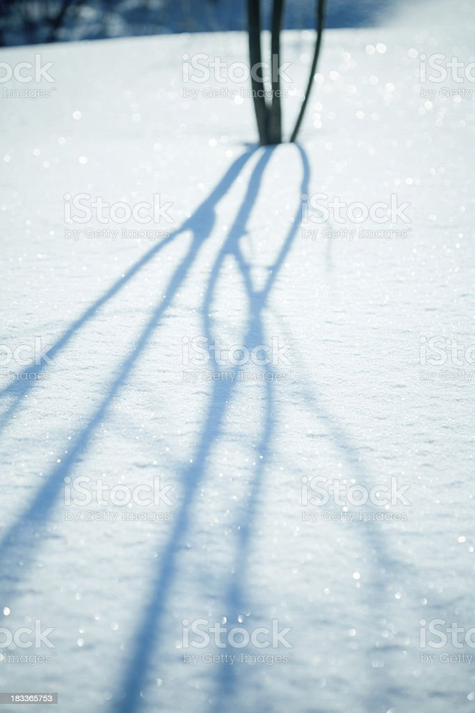 Tree shadow at snowdrift royalty-free stock photo