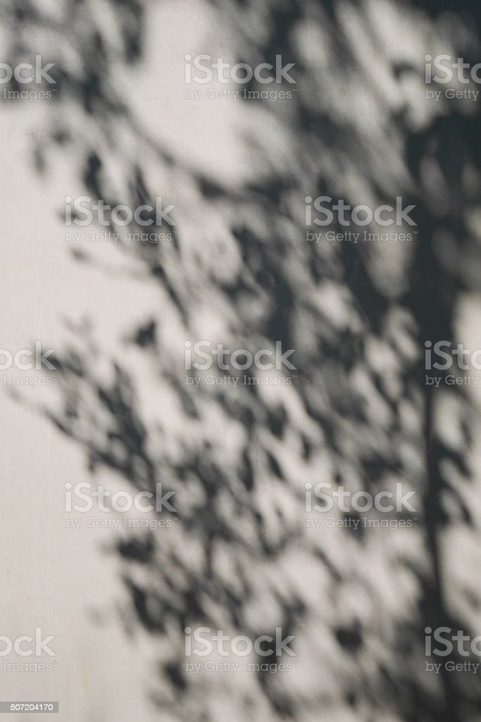 tree shadow on the white concrete wall pattern stock photo
