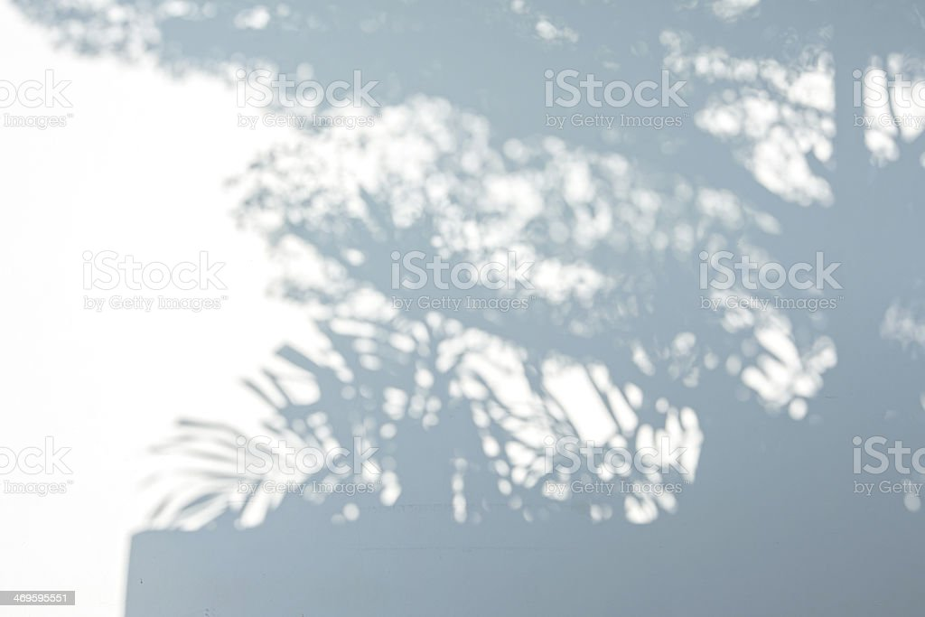 Tree shadow on the White Wall Background stock photo