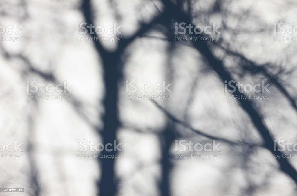 Tree shadow on the White Wall royalty-free stock photo
