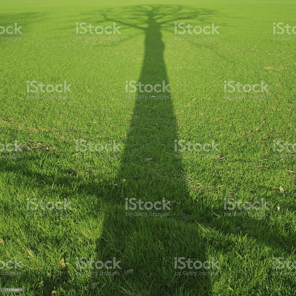 Tree shadow royalty-free stock photo