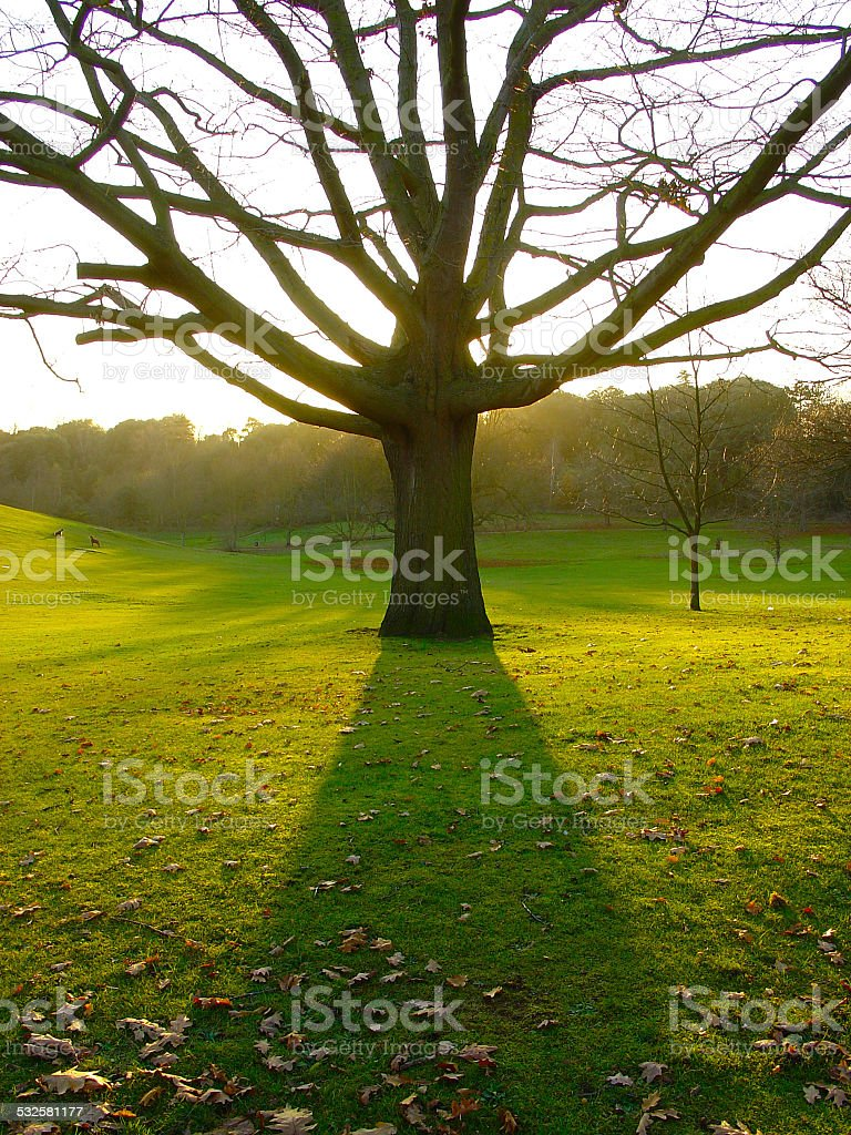 Tree Shadow stock photo
