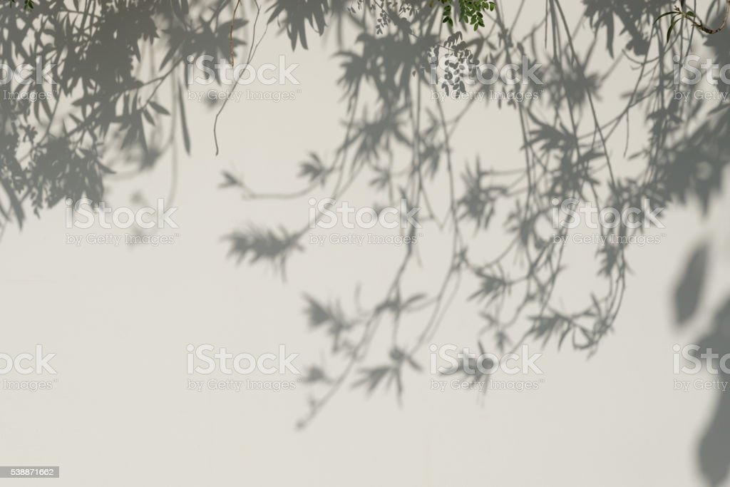 Tree Shadows on The Wall. stock photo