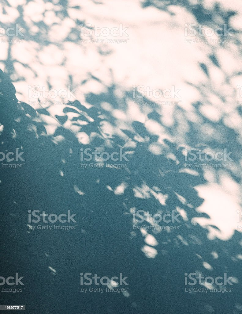 Tree shadows on wall background stock photo