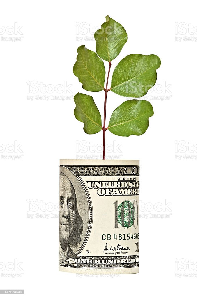 Tree shoot growing from dollar bill stock photo