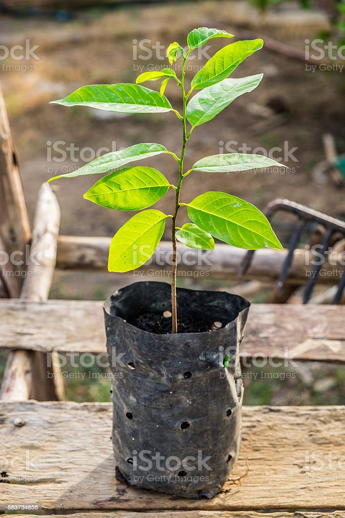 Tree shoots in black bag on wooden stock photo