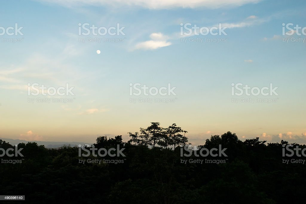 Tree silhouette and orange blue sky in evening time stock photo