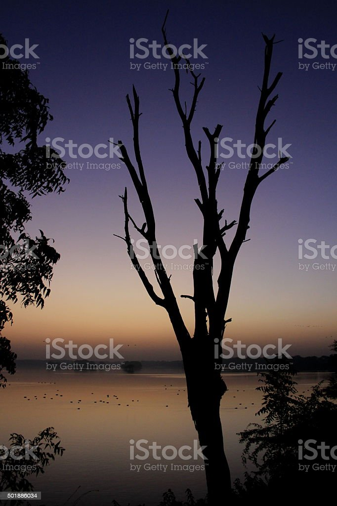 Tree Silhouette at Dawn stock photo