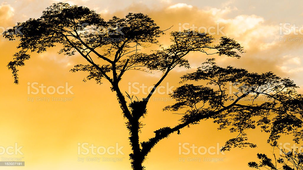 Tree Silhouette at Lake Arenal, Costa Rica stock photo