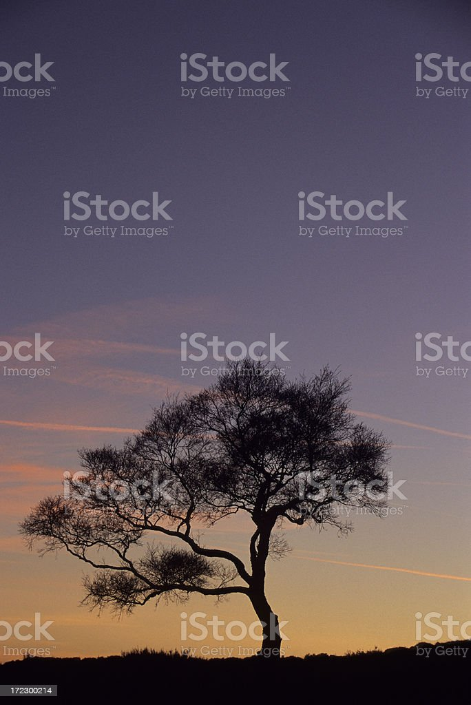 Tree Silhouette at Sunset royalty-free stock photo
