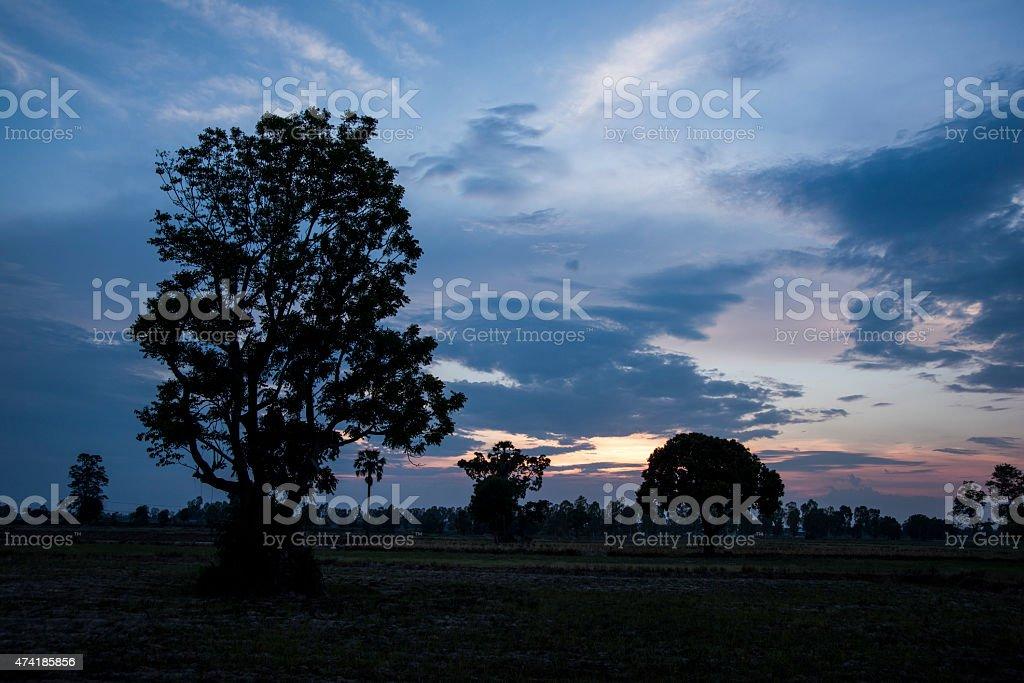 Tree silhouette beautiful sunsets and sunrises stock photo