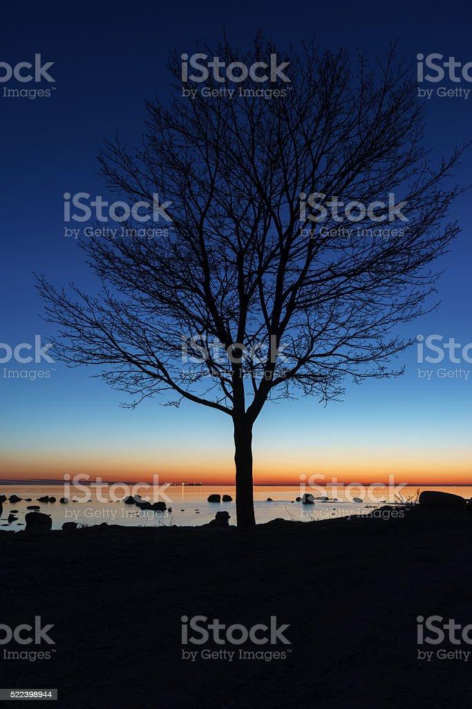 Tree silhouette by night stock photo
