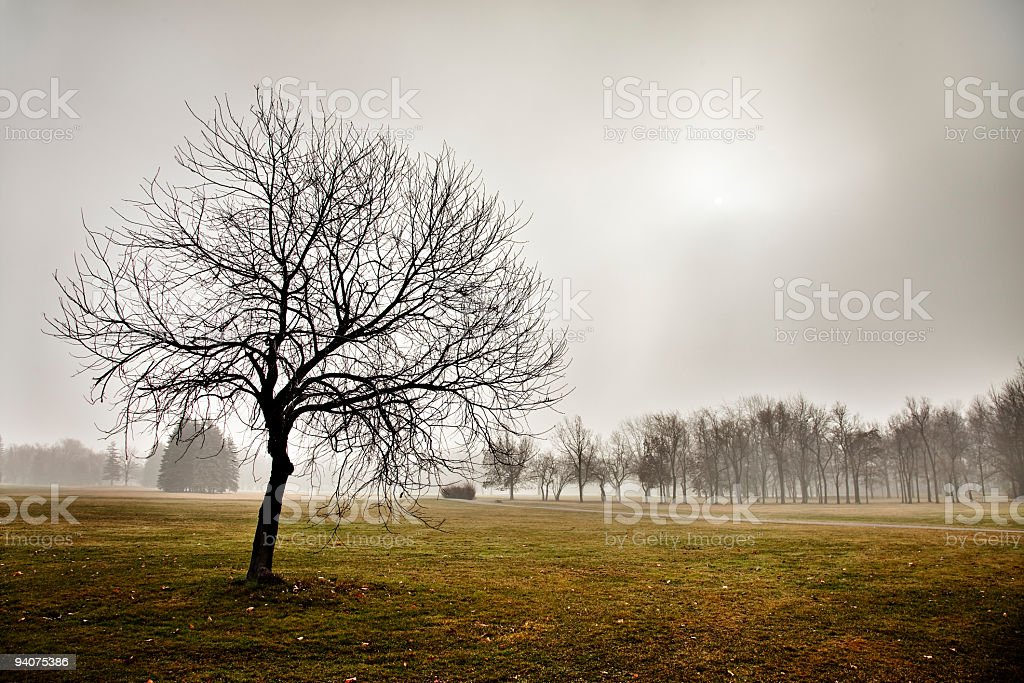 Tree silhouette in front of foggy park horizontal HDR royalty-free stock photo