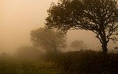 tree silhouette in mist