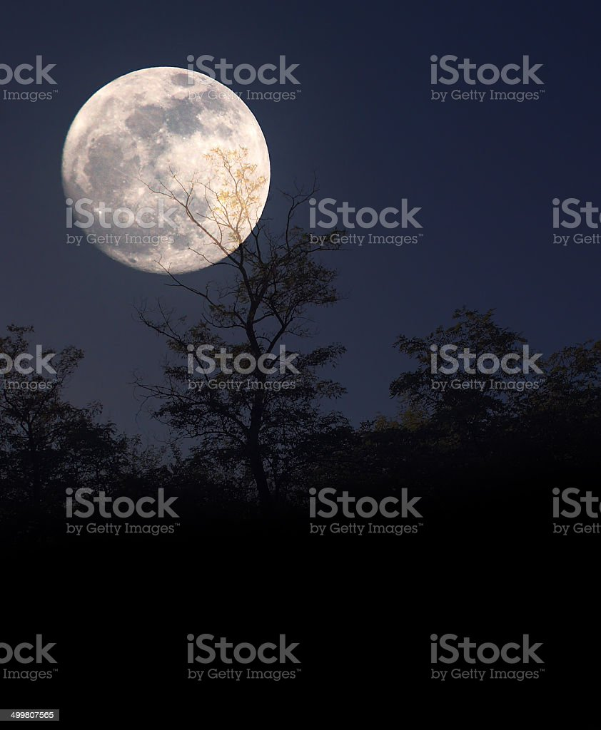 Tree silhouette in moonlight stock photo