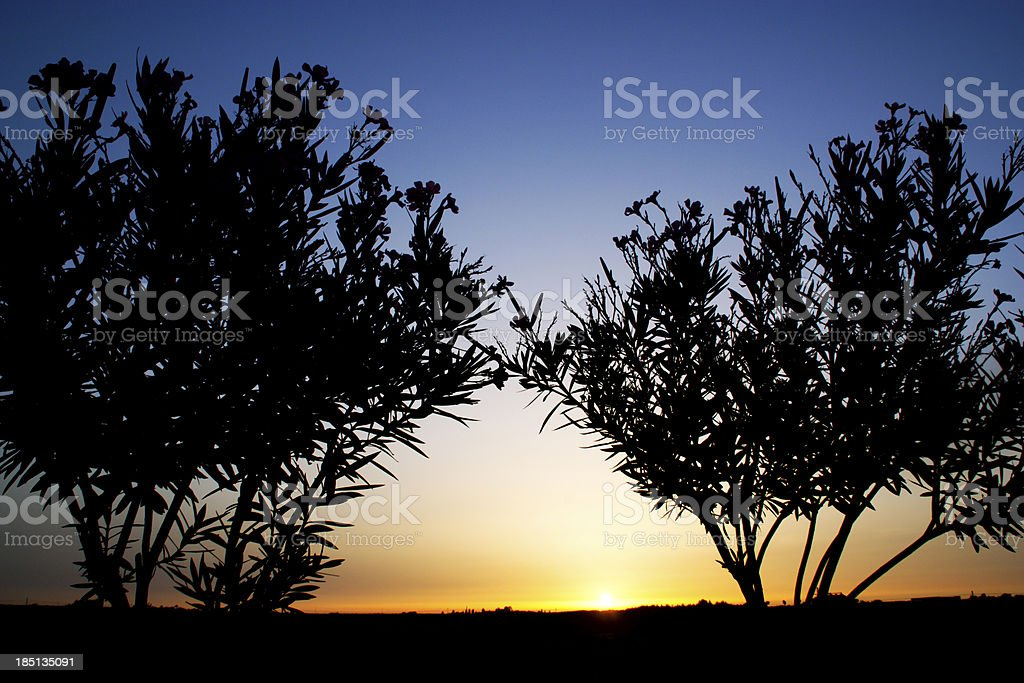 Tree silhouette in sunset royalty-free stock photo