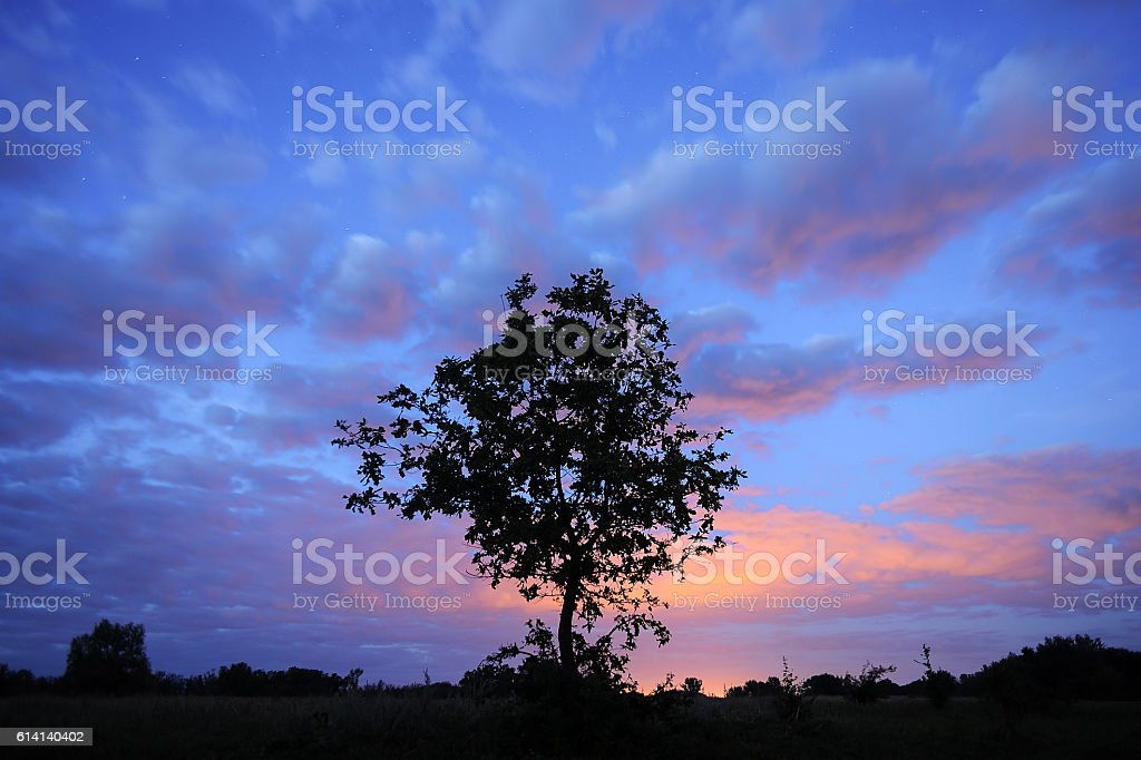 Tree silhouette on starry sky. stock photo
