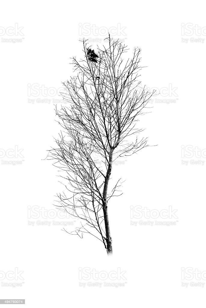 Tree silhouette on white background stock photo