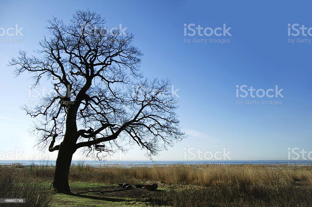 Silhueta de Árvore foto de stock royalty-free