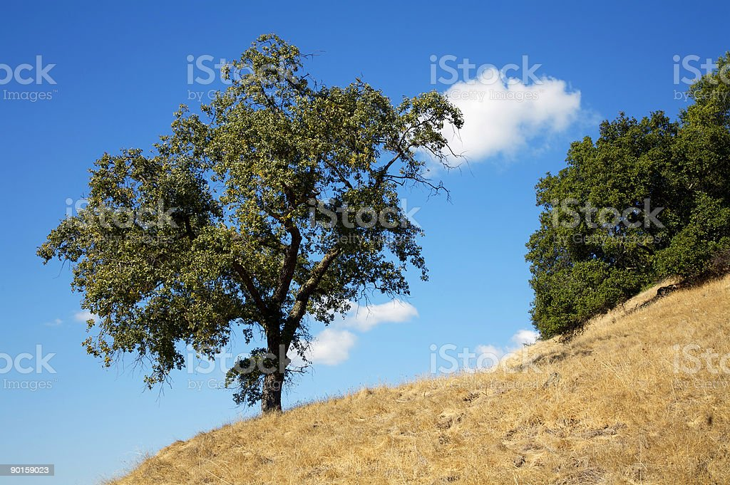 Tree Silhouette royalty-free stock photo