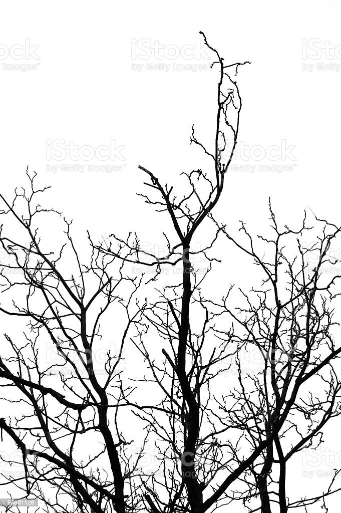 tree silhouette royalty-free stock photo
