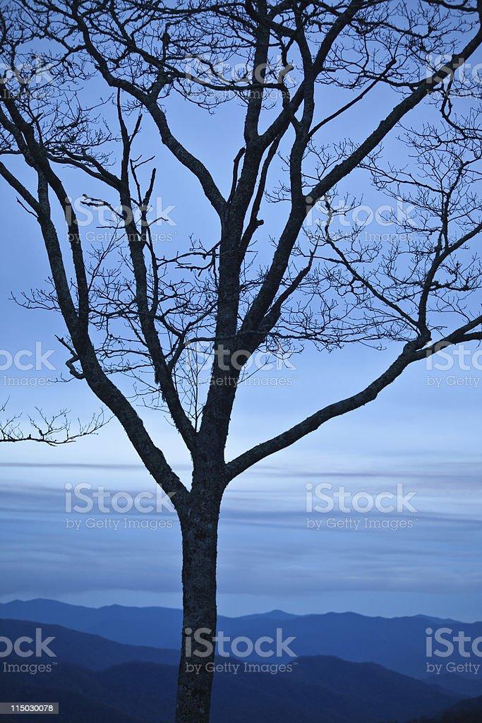 Tree Silhouette Smokies stock photo
