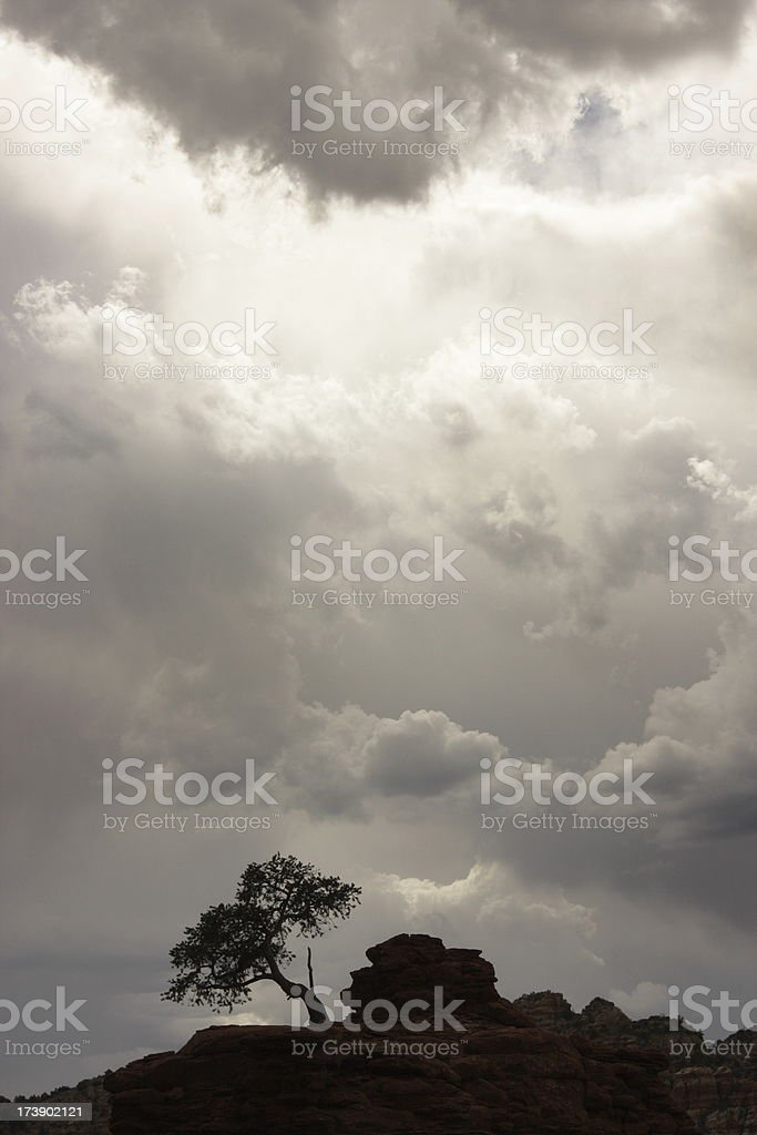 Tree Silhouette Storm Cloud Sky Wilderness stock photo