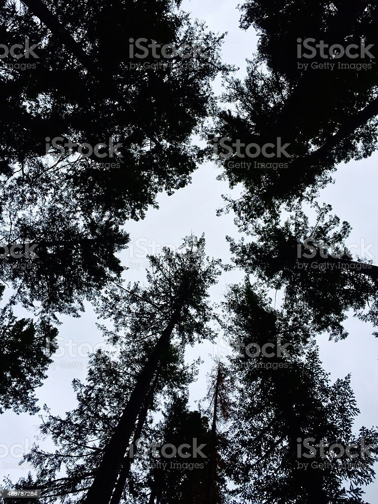 Tree silhouette with sky royalty-free stock photo