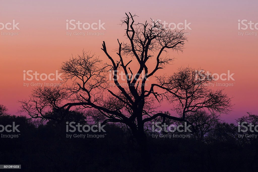 Tree silhouetted against a colorful sky 4 stock photo