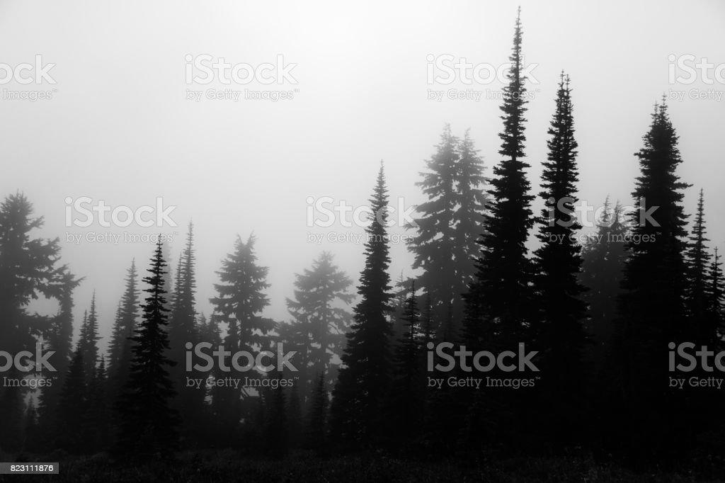 Tree Silhouettes in Mt. Rainier National Park stock photo