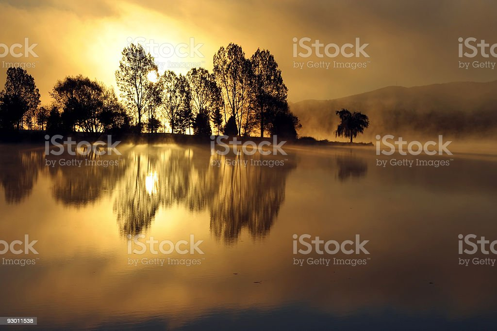 Tree silhouettes in the morning royalty-free stock photo