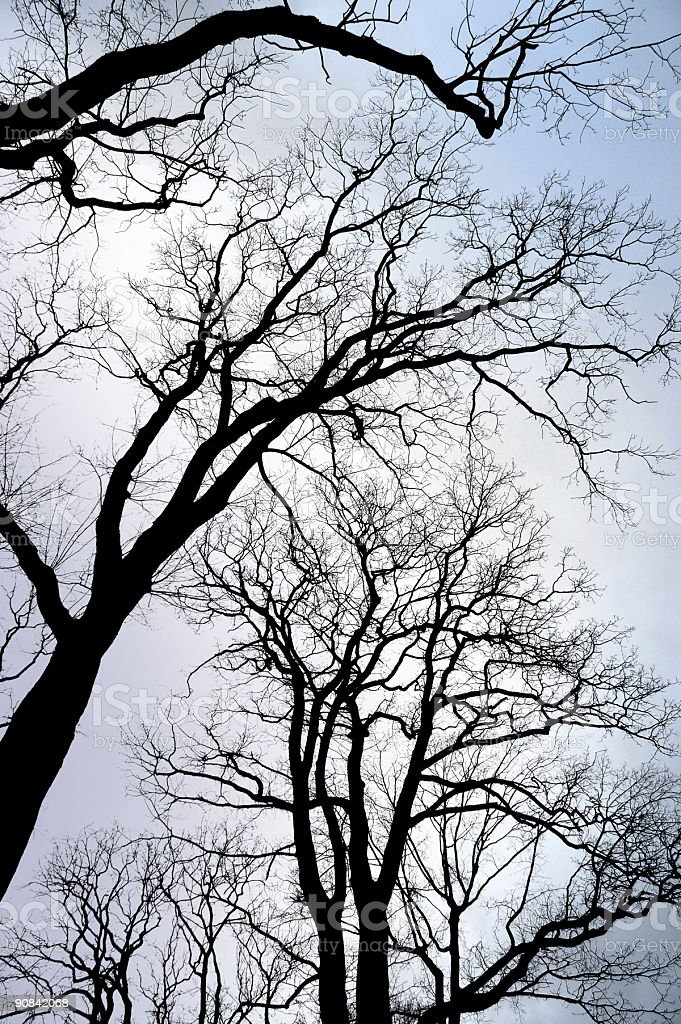 Tree silhouettes royalty-free stock photo