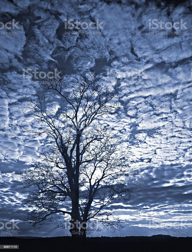 Tree sillouetted against a dark sky of blue stock photo