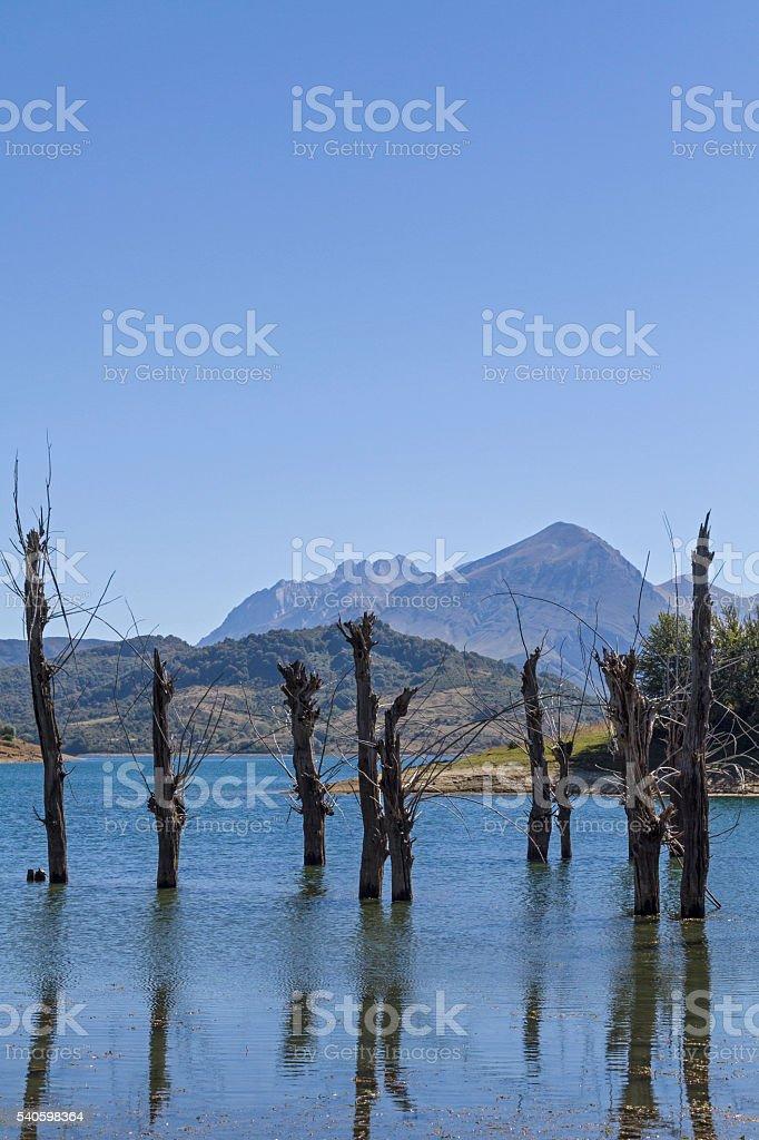 Tree skeletons in  Lago die Campostosto stock photo
