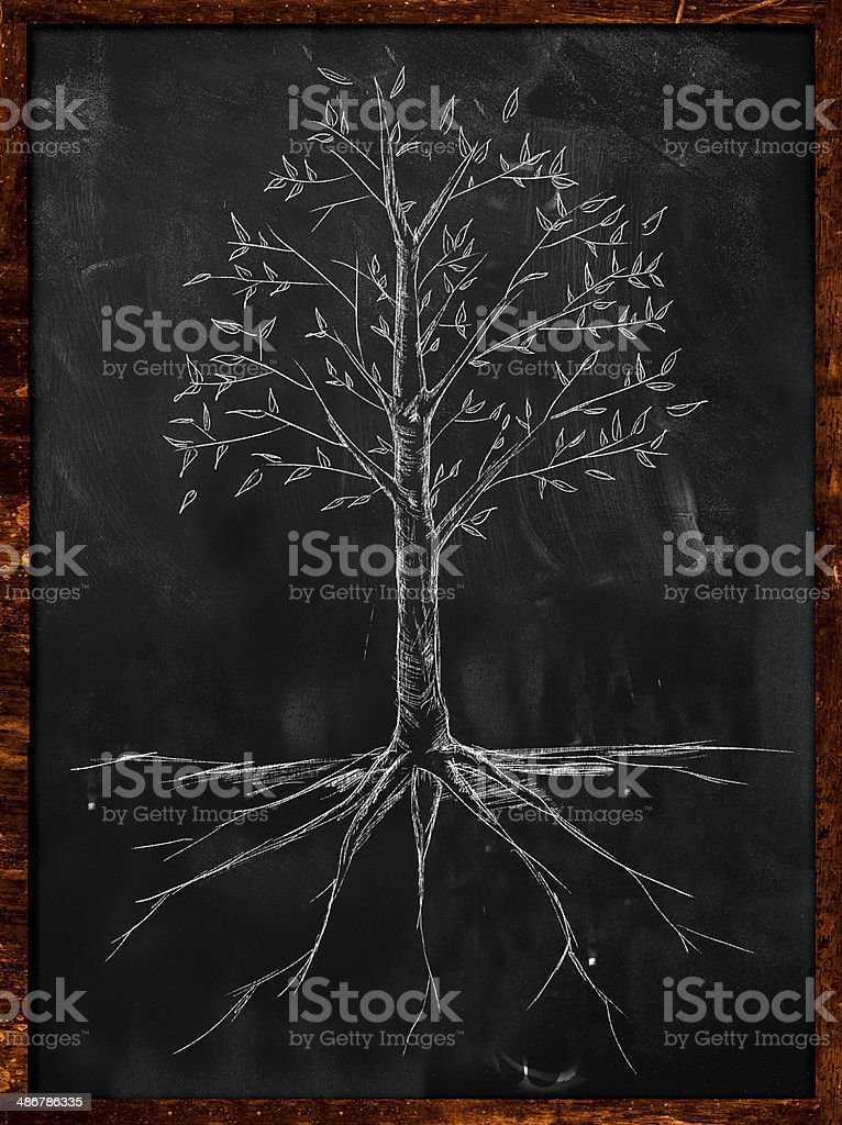 Tree Sketch leaves and root on blackboard stock photo