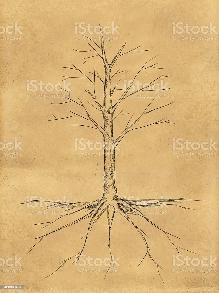Tree Sketch no leaves root on paper stock photo