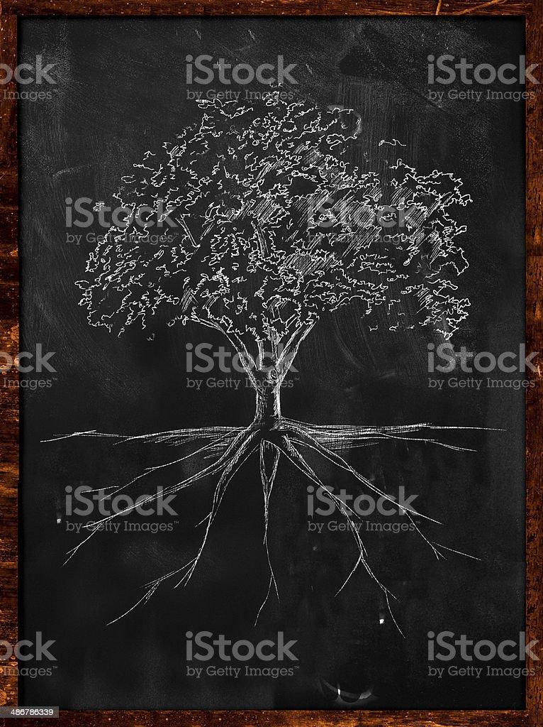Tree Sketch root on blackboard stock photo