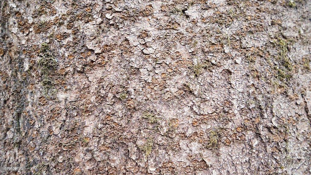 Tree skin of a cherry tree stock photo