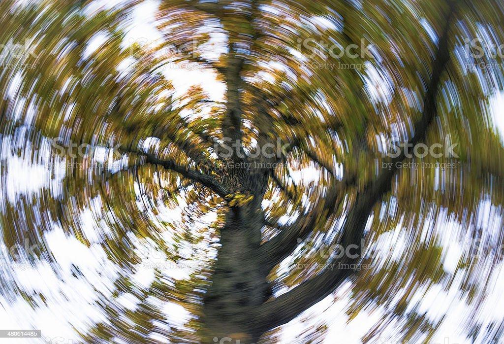 Tree Spin stock photo